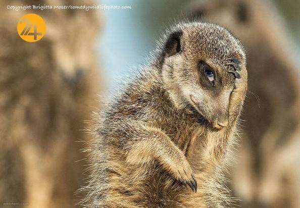 تصاویر خندهدار از حیوانات